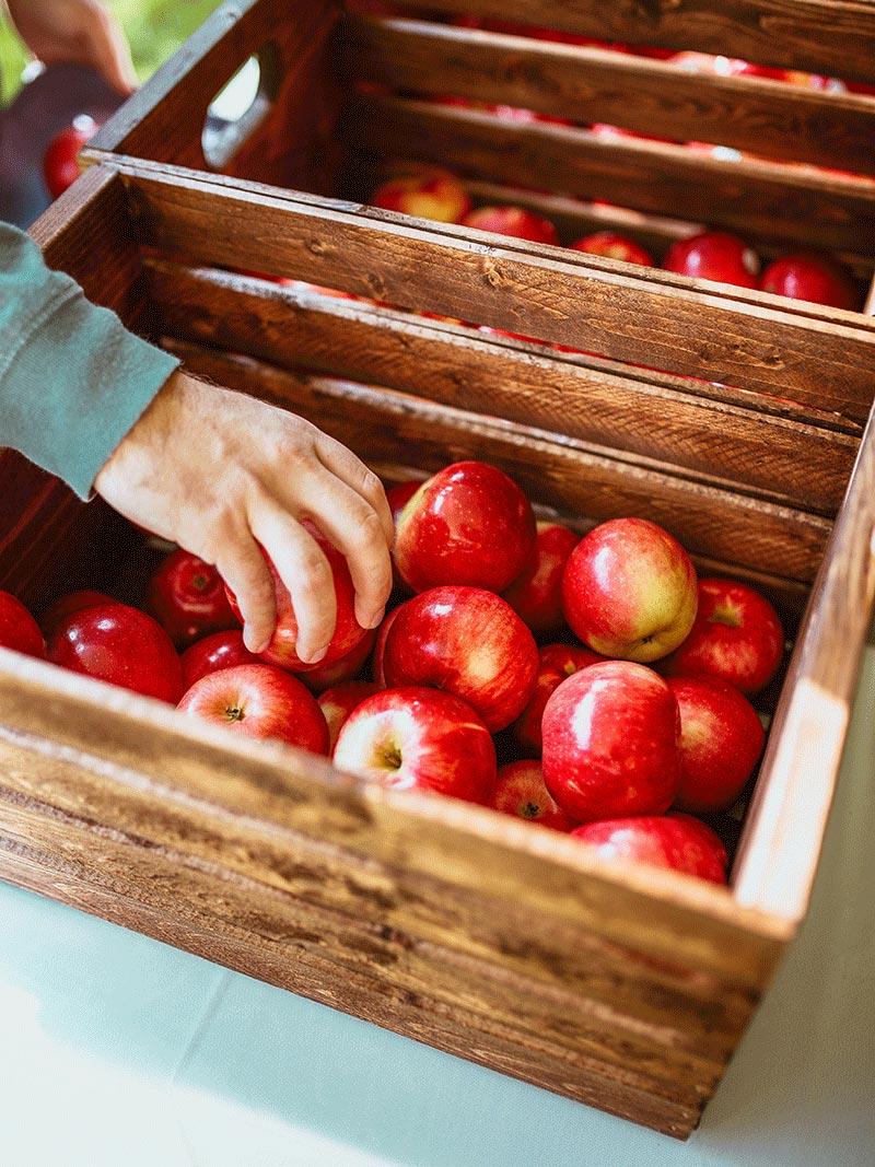 Coltivare mele di montagna
